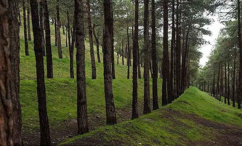 پارک جنگلی لویزان در شرق تهران
