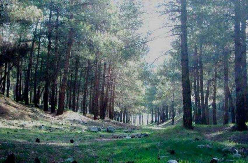پارک جنگلی لویزان