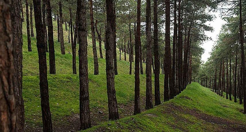 پارک جنگلی سوهانک